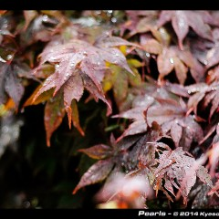 red leafs under rain by Kyesos
