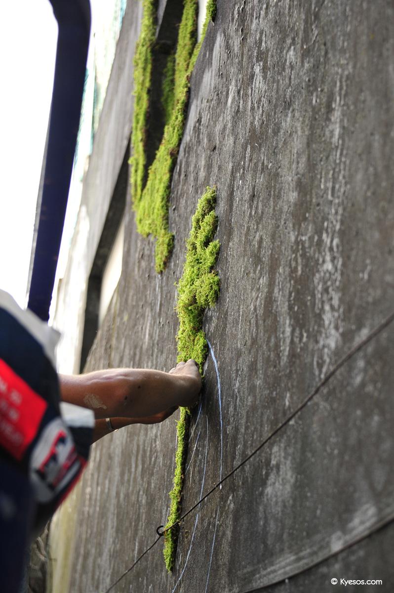 #StreetArt : « Vegetal Graffiti »…